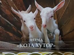 koza_hutor